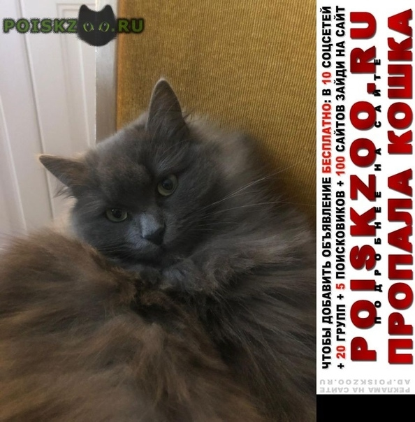 Пропала кошка жк отрада г.Москва