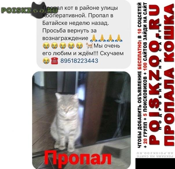 Пропал кот г.Ростов-на-Дону