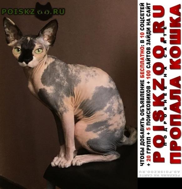 Пропала кошка домашняя г.Лобня