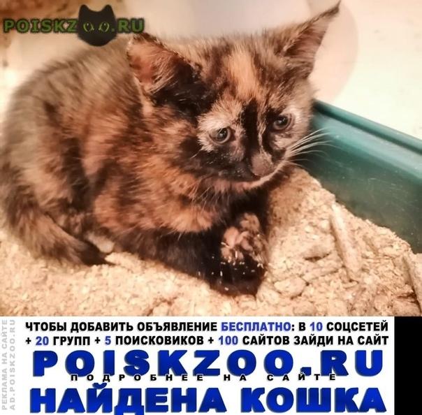 Найдена кошка котенок примерно 2 мес г.Санкт-Петербург