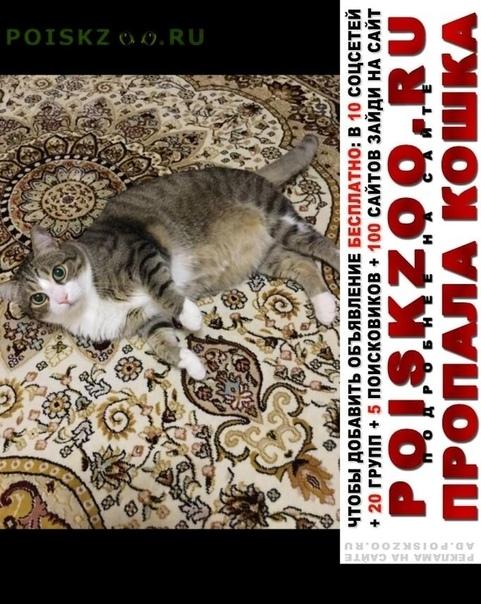 Пропал кот домашний боится улиц г.Астана Акмолинская обл. (Целиноградская обл.)