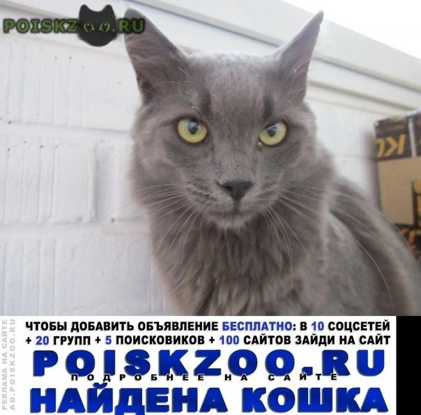 Найден кот самец британец зжм г.Ростов-на-Дону