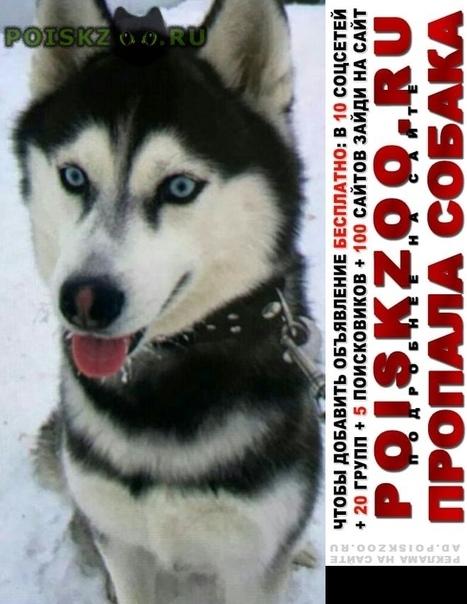 Пропала собака срочно  г.Чехов