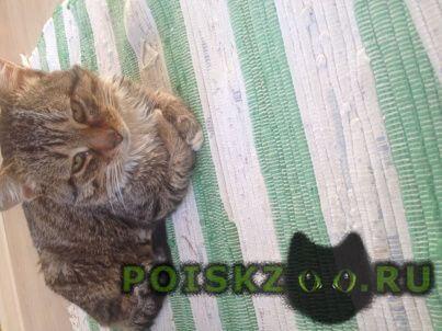 Найден кот г.Кострома