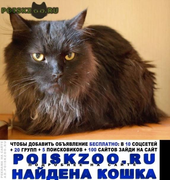 Найден кот г.Новосибирск
