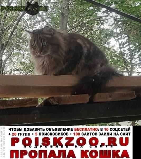 Пропал кот кеша Москва