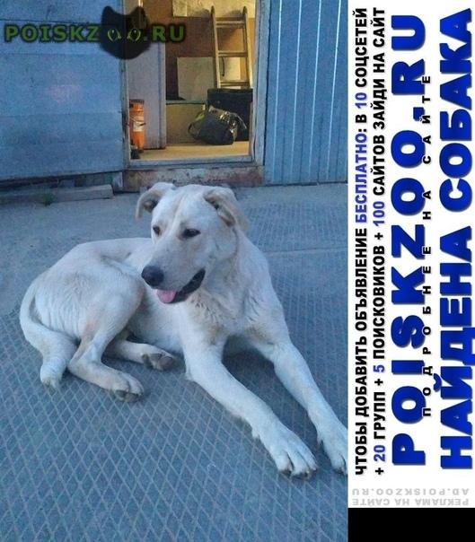Найдена собака очень истощена г.Нефтеюганск