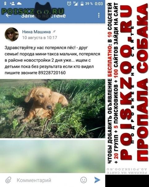 Пропала собака кобель такса г.Оренбург