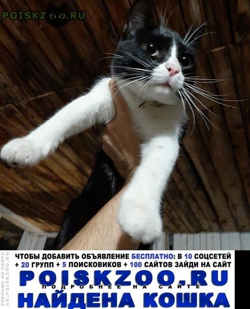 Найден кот в ошейнике г.Долгопрудный