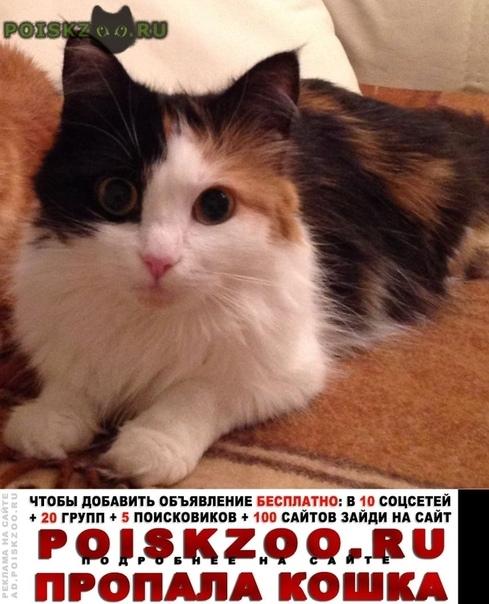 Пропала кошка на рогачевском шоссе г.Лобня