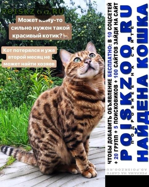 Найден кот предположительно 1год г.Голицыно (Московская обл.)