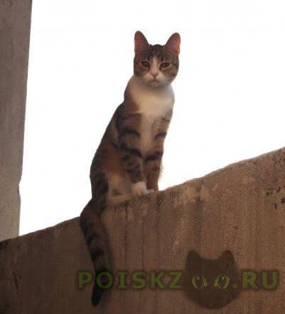 Пропала кошка г.Санкт-Петербург