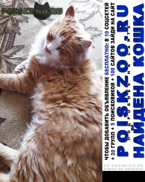 Найдена кошка ул.челябинская г.Москва