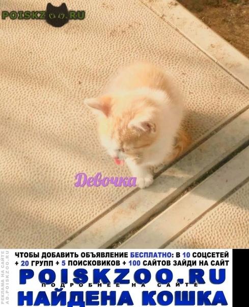 Найдена кошка рыжая г.Киров (Кировская обл.)