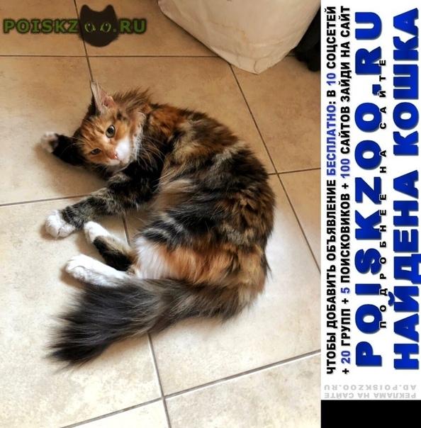 Найдена кошка ласковая трехцветочка г.Москва