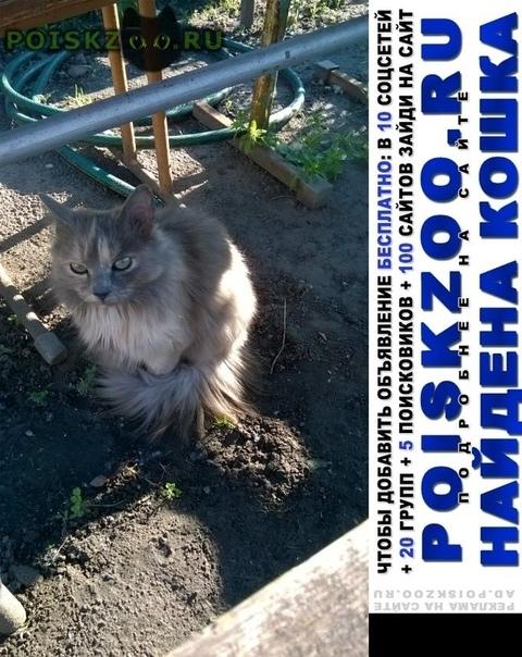 Найдена кошка мы хотим жить г.Тюмень