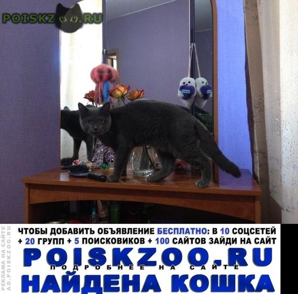 Найдена кошка г.Иркутск