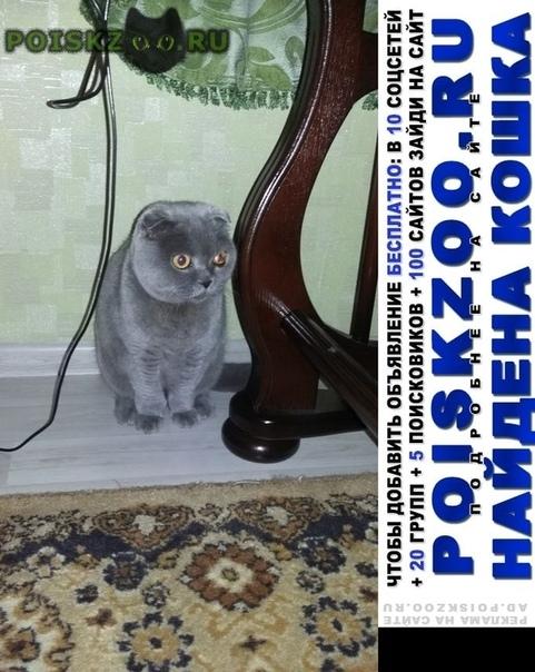 Найдена кошка или кот г.Электросталь