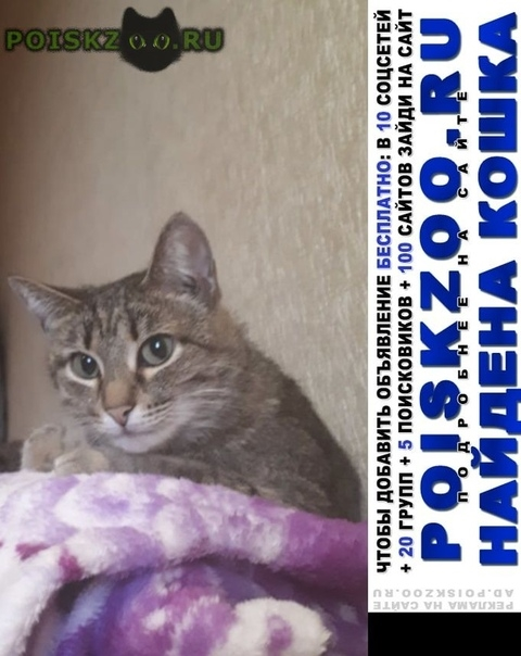 Найдена кошка серая кошечка г.Москва