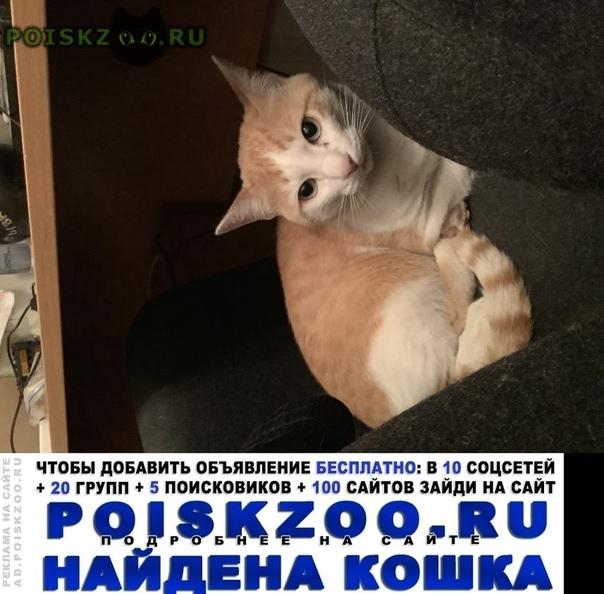 Найдена кошка г.Екатеринбург
