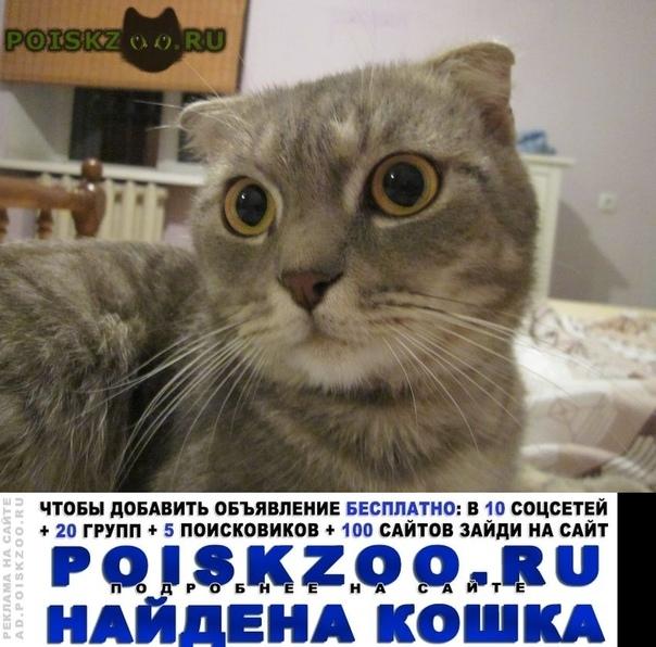 Найден кот молодой вислоухий самец. г.Ростов-на-Дону