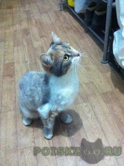 Найдена кошка г.Жуковский