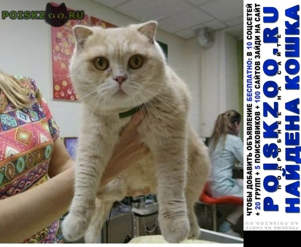 Найдена кошка г.Артем