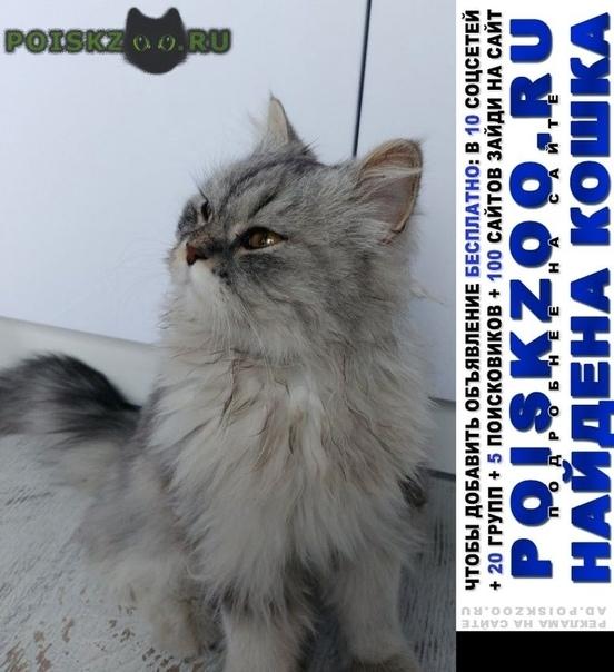Найдена кошка цвет серебро, карие глазки, девочка. г.Ростов-на-Дону
