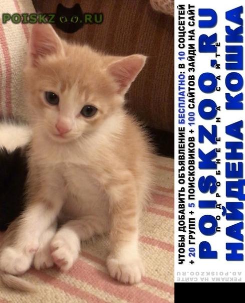 Найден котёнок персикового цвета г.Подольск