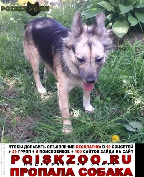 Пропала собака. мия г.Москва