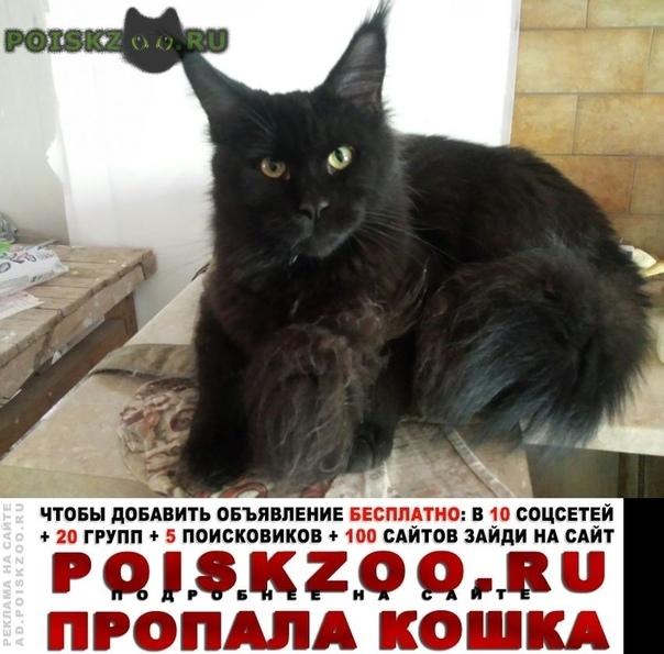 Пропала кошка кошечка черная с кисточками г.Москва