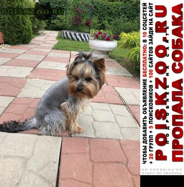 Пропала собака кобель йоркоширский терьер г.Москва