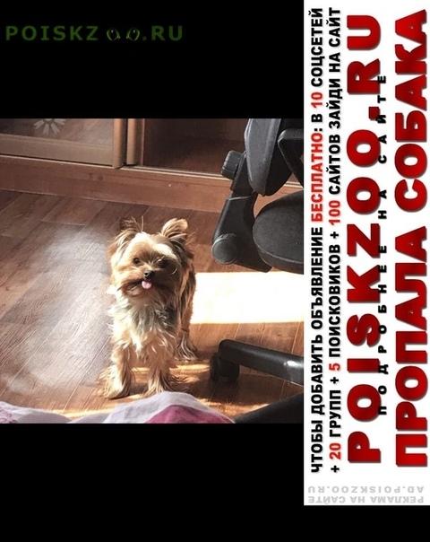 Пропала собака кобель г.Волгоград