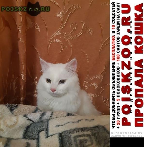 Пропал кот вознаграждение г.Краснодар