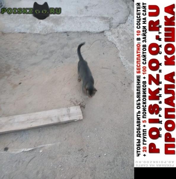 Пропал кот г.Обухово