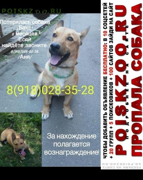 Пропала собака кобель мальчик г.Краснодар
