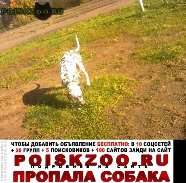 Пропала собака г.Рыбинск