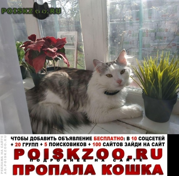 Пропал кот моня, любимец семьи г.Таганрог