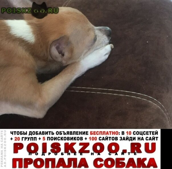 Пропала собака кобель помогите г.Казань