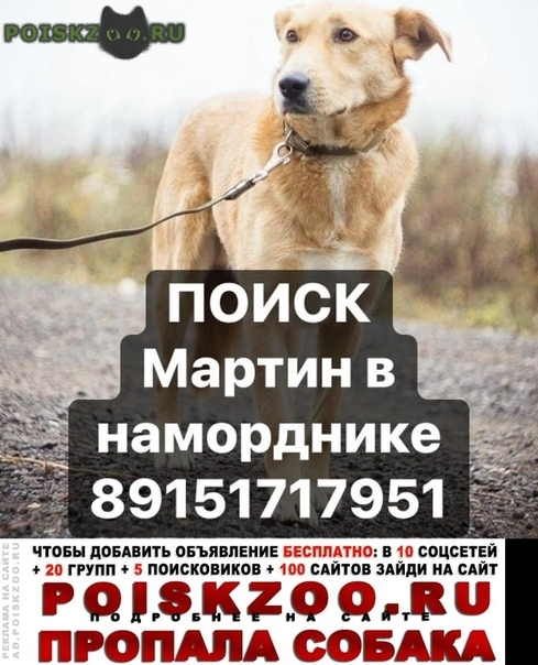 Пропала собака кобель в наморднике г.Москва