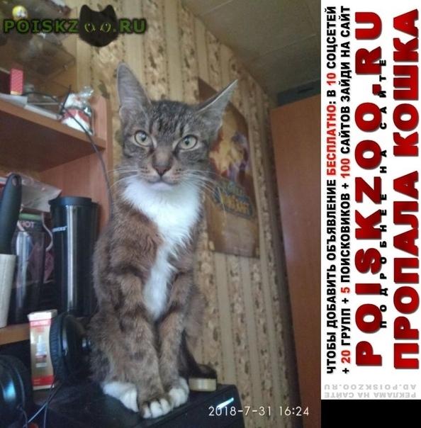 Пропала кошка откликается на кличку кнопа г.Ногинск