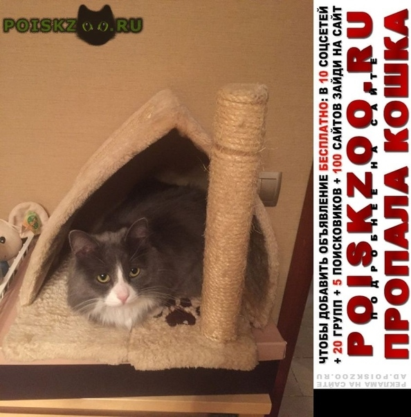 Пропал кот дмитровский проезд г.Москва
