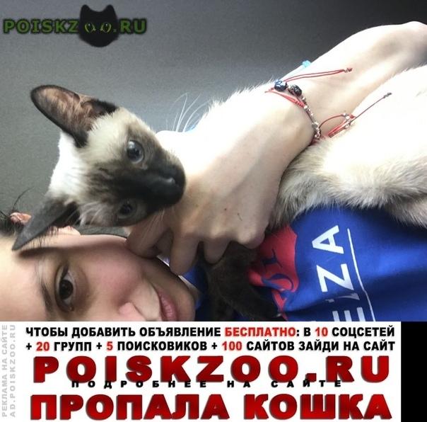 Пропала кошка ленина 43. может ушла дальше. потерялась г.Новокузнецк