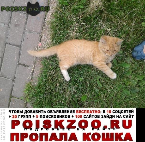 Пропал кот рыжий енок в химках г.Химки