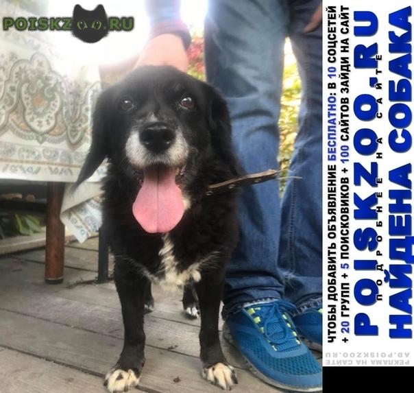 Найдена собака 8.09 мкрн. белые столбы г.Домодедово