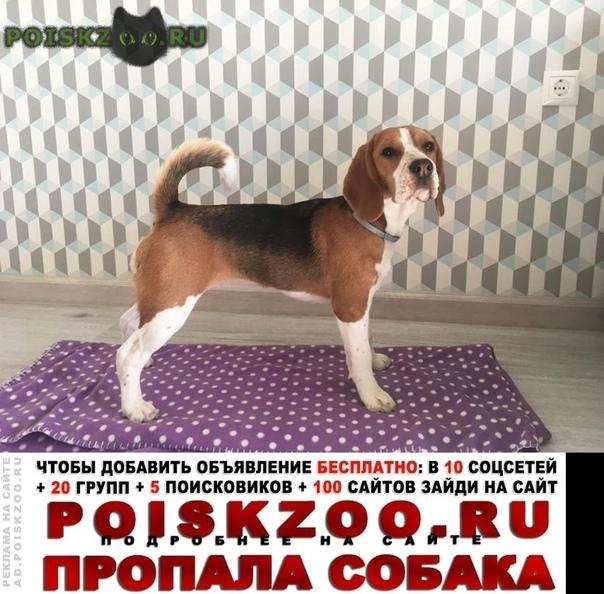 Пропала собака 7.09.2019 в 21:00 г.Красногорск