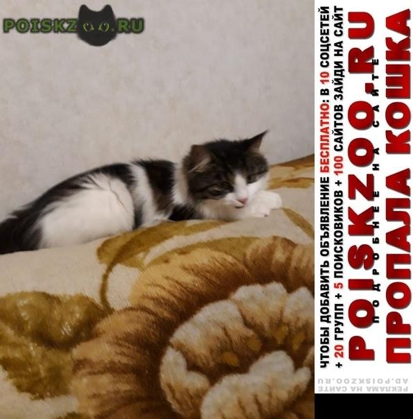 Пропала кошка снт михайловский г.Кировск