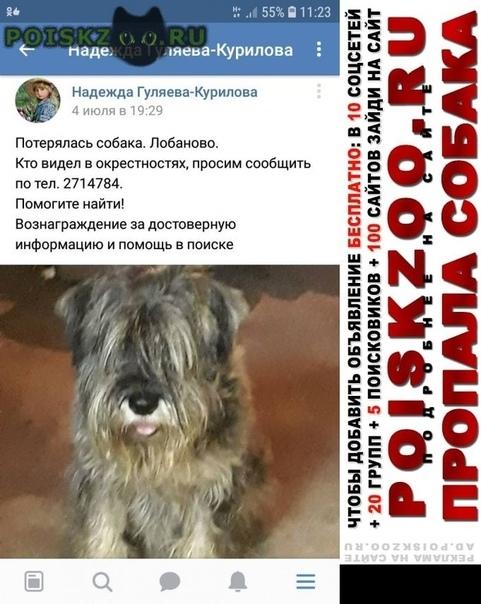 Пропала собака 4 июля 2018 года г.Пермь