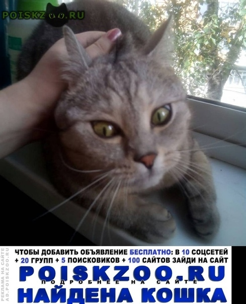 Найден кот. г.Москва