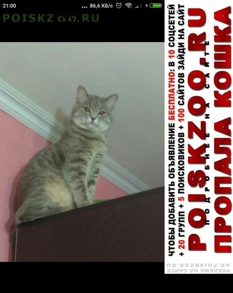 Пропала кошка на ней был поводок г.Электросталь